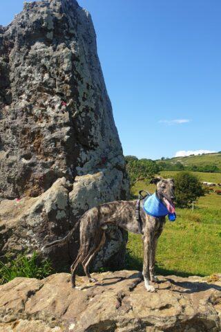 Dog walk at Mottistone Meander: Climb to the Common photo