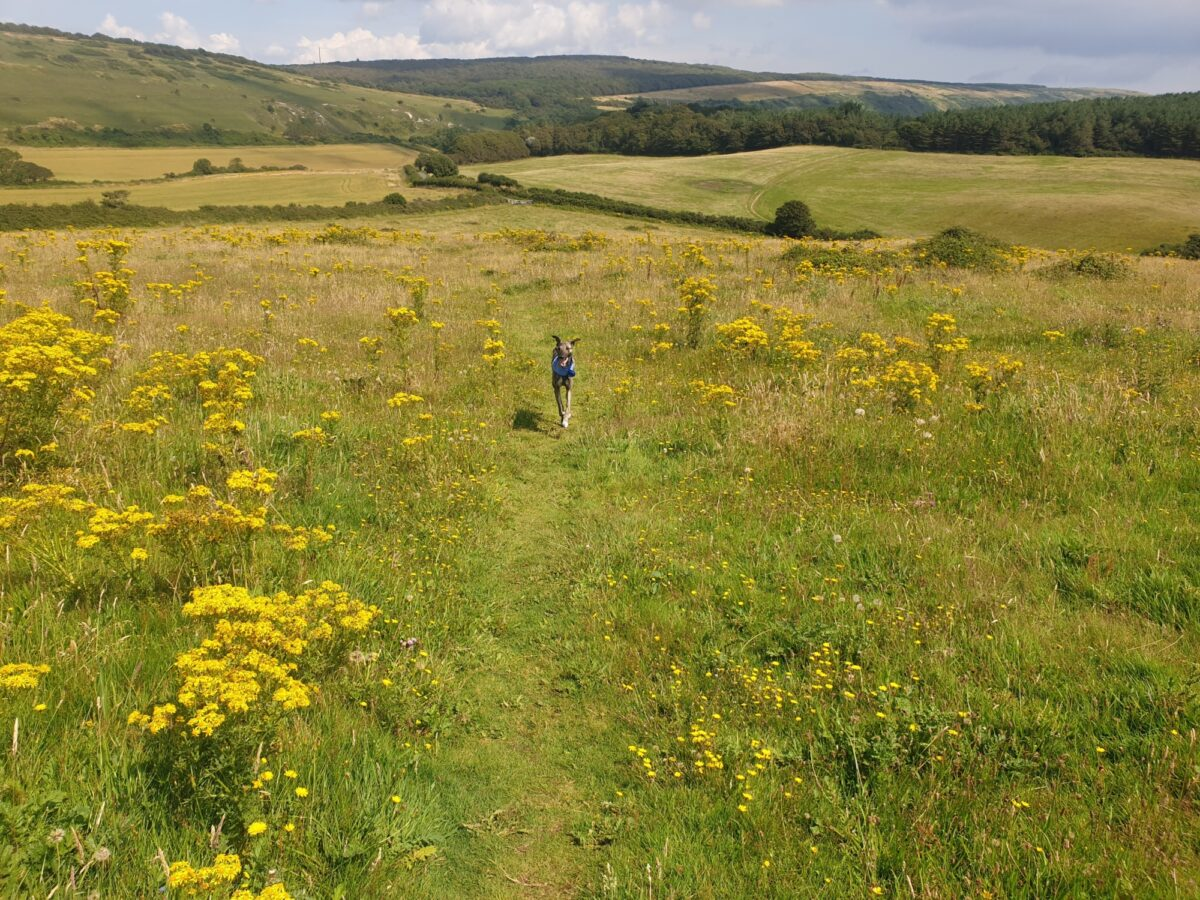 Mottistone Meander: Climb to the Common large photo 2