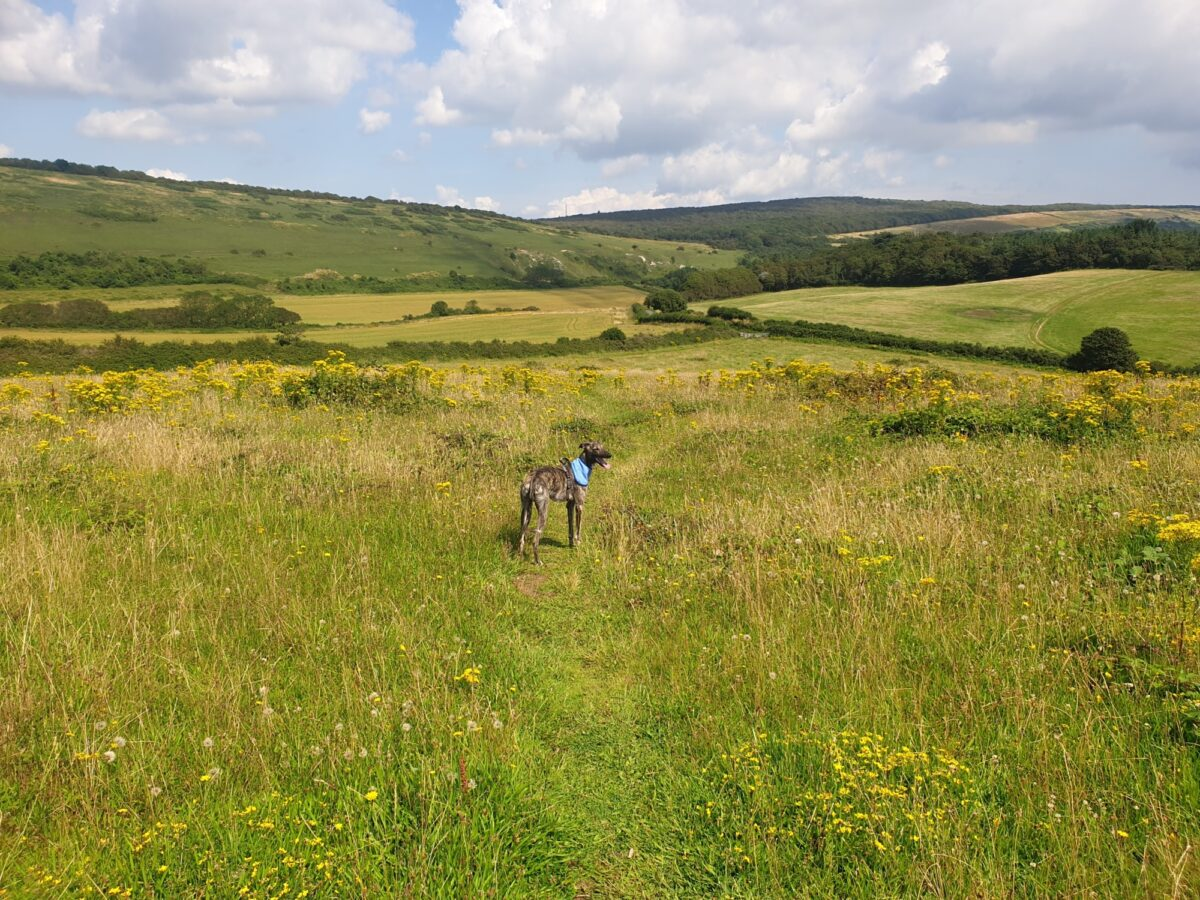 Mottistone Meander: Climb to the Common large photo 3