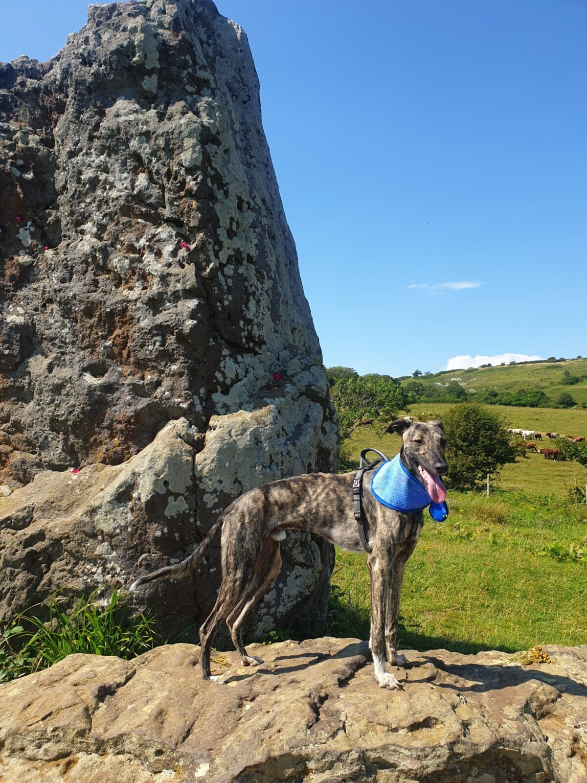 Mottistone Meander: Climb to the Common large photo 1