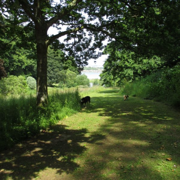 Mount Edgecumbe Country Park photo 5