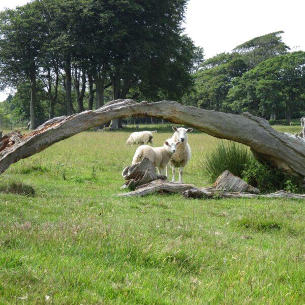 Mount Edgecumbe Country Park photo 9
