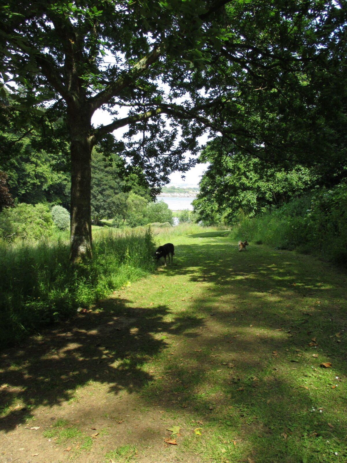 Mount Edgecumbe Country Park large photo 5