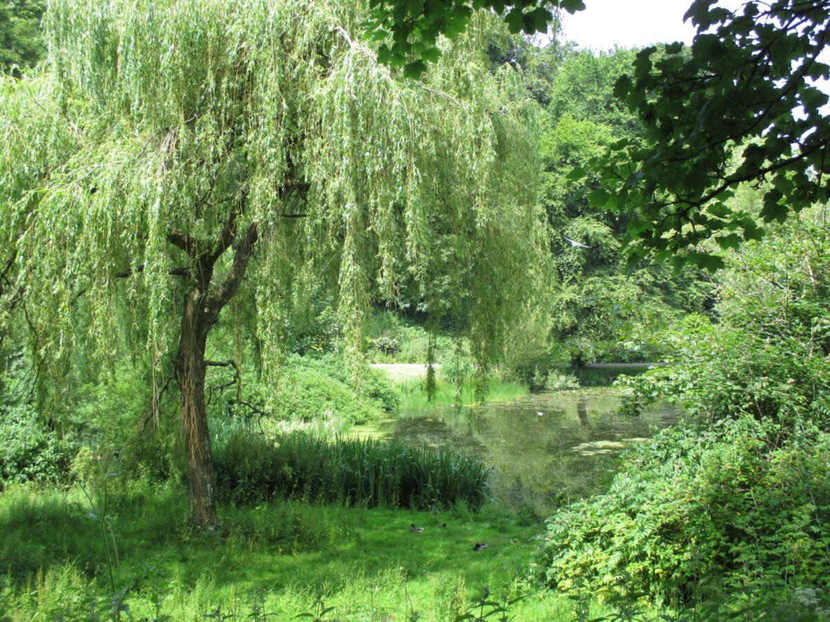 Mount Edgecumbe Country Park large photo 7