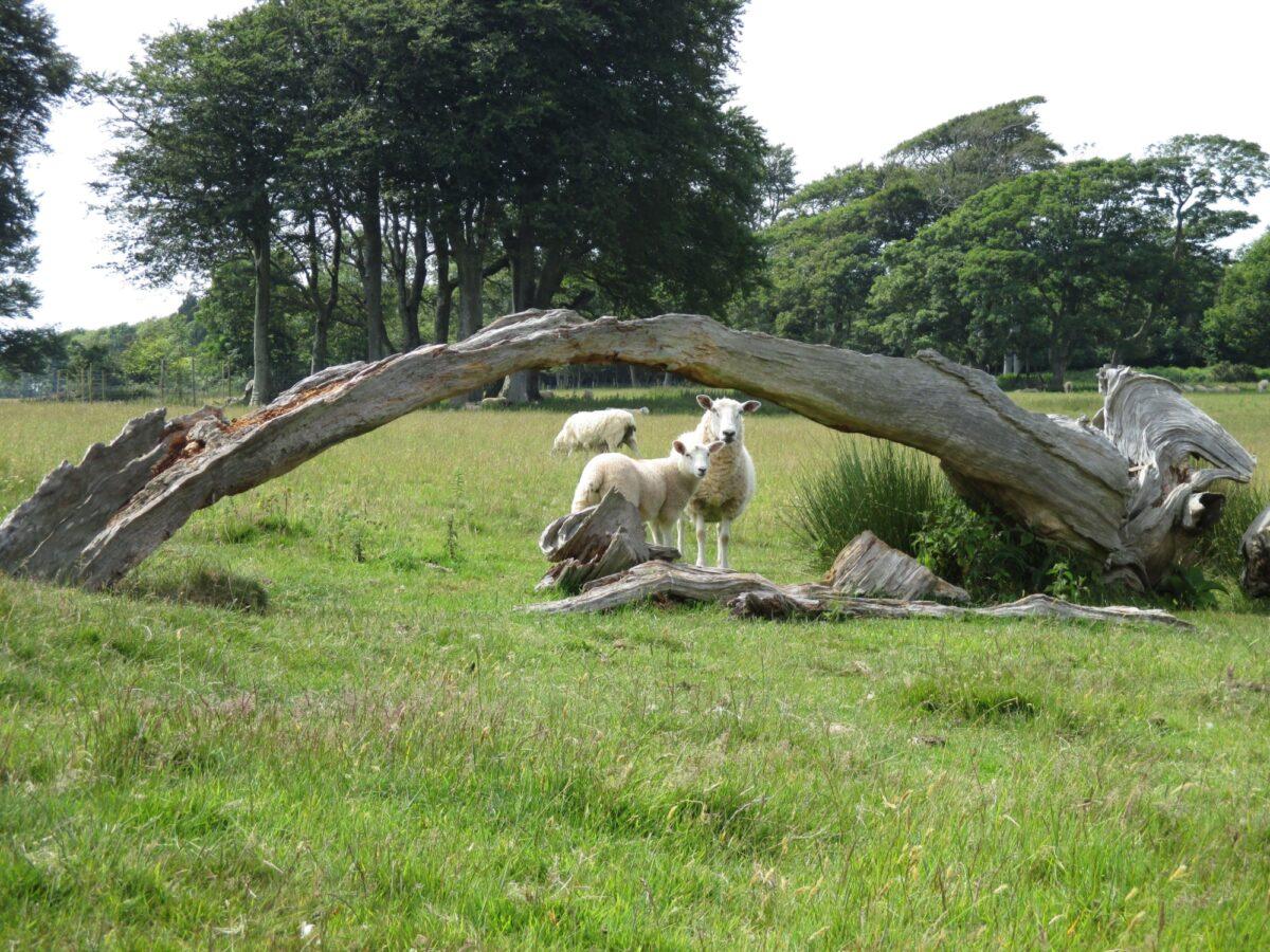 Mount Edgecumbe Country Park large photo 9