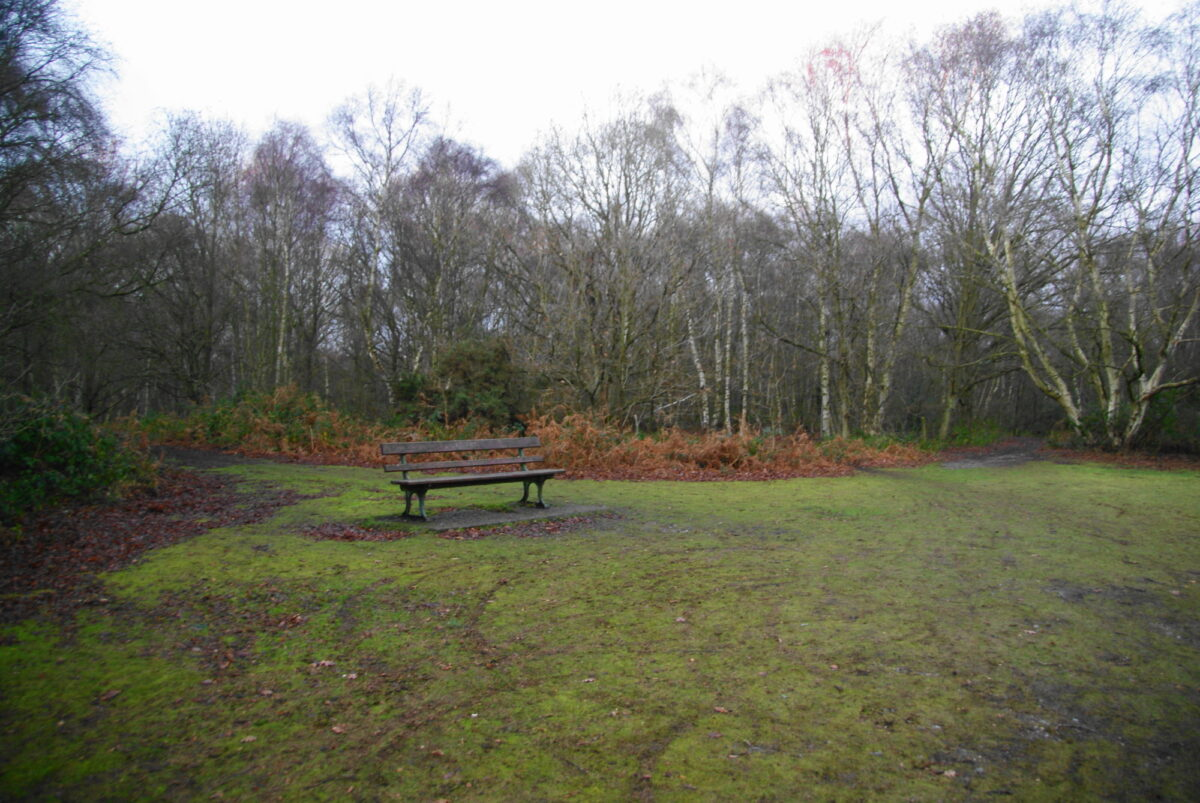 Mousehold Heath Norwich large photo 3
