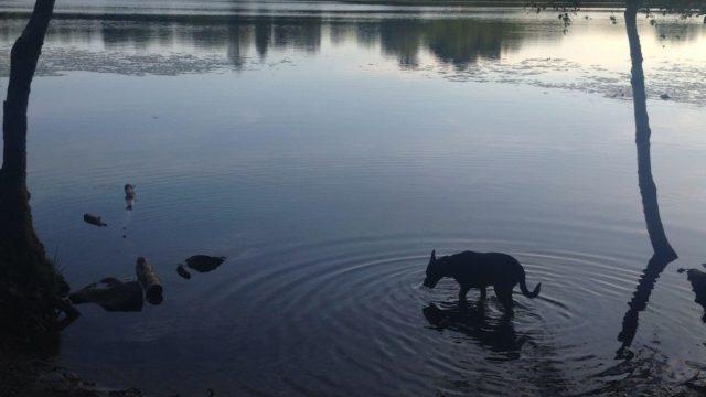 Dog walk at Mugdock Country Park