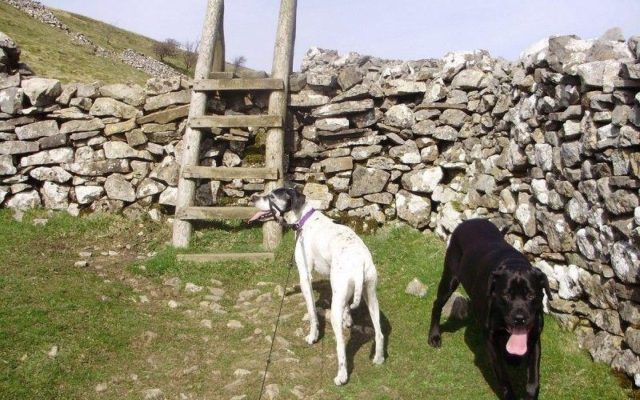 Muker Dog walk in Yorkshire (North)