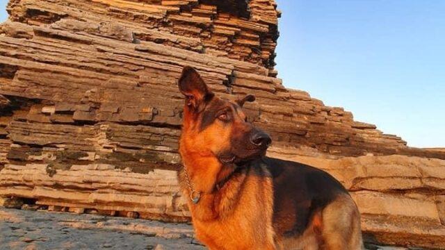 Dog walk at Nash point