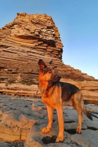 Dog walk at Nash point photo