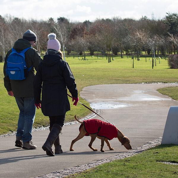 Dog walk at National Memorial Arboretum