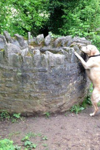 Dog walk at Neston - Woodlands And Fields photo