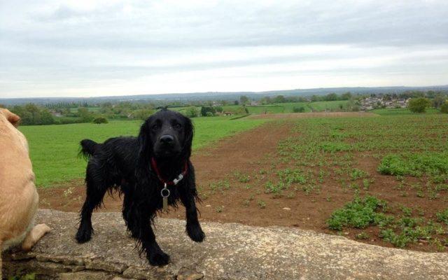 Neston - Woodlands And Fields Dog walk in Wiltshire