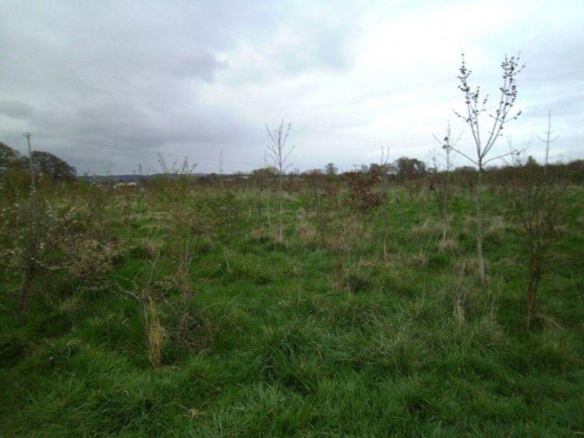 Netherclay Community Woodland large photo 1