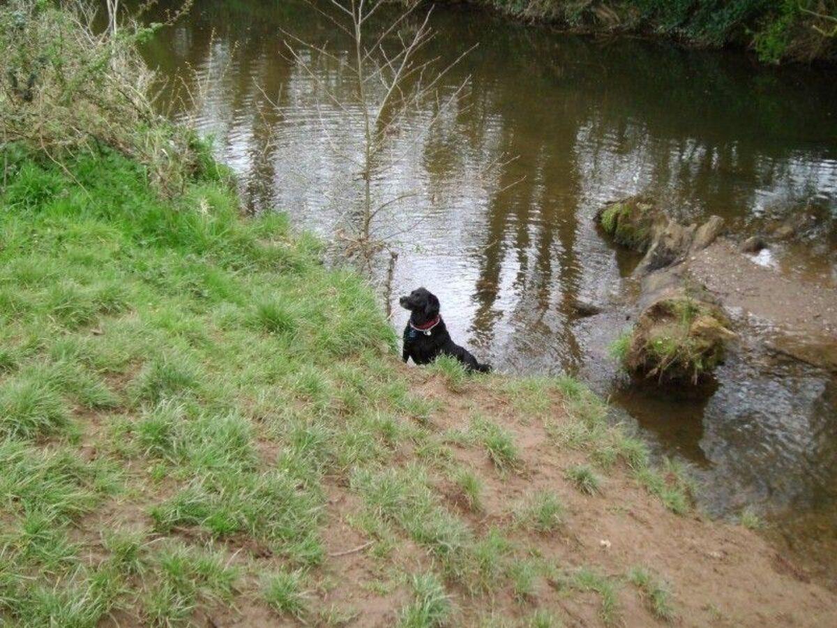 Netherclay Community Woodland large photo 2