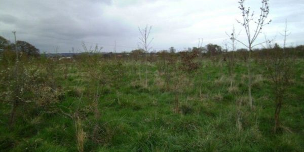 Netherclay Community Woodland
