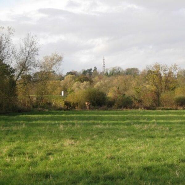 Dog walk at Newbold Comyn
