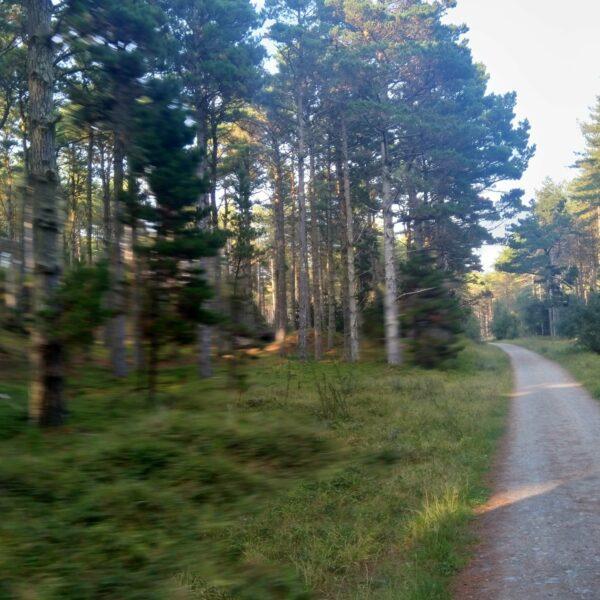 Newborough Forest, Isle of Anglesey photo 7