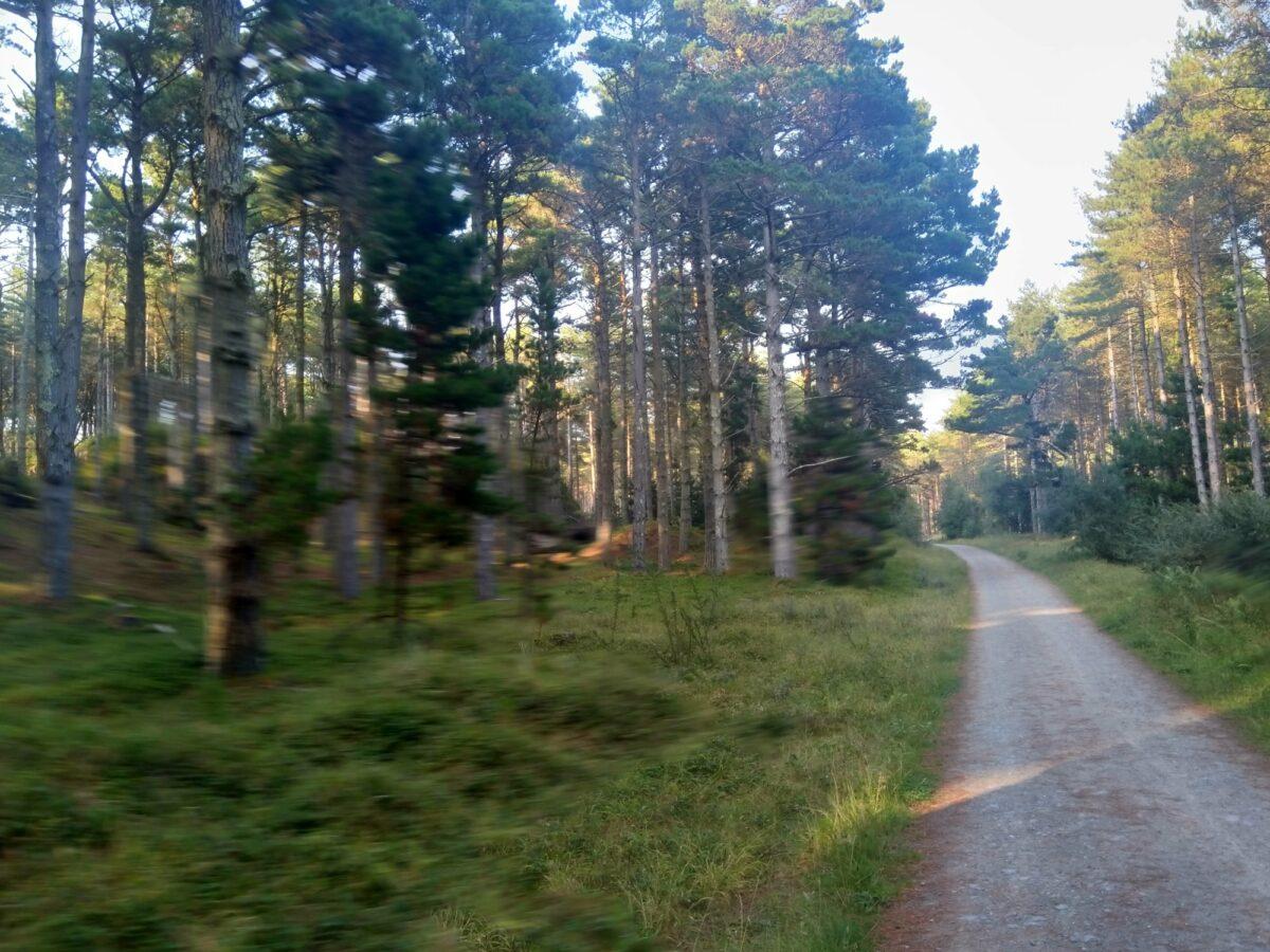 Newborough Forest, Isle of Anglesey large photo 7