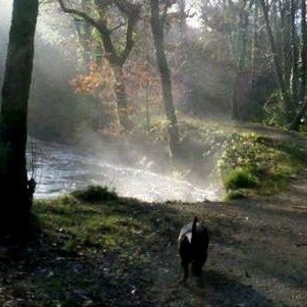 Dog walk at Newbridge River