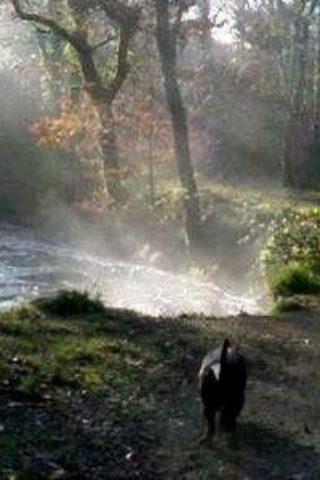 Dog walk at Newbridge River photo