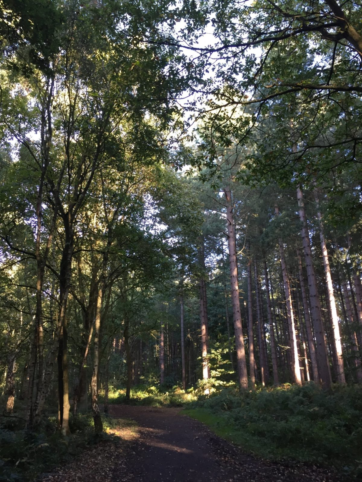 Newmillerdam large photo 3