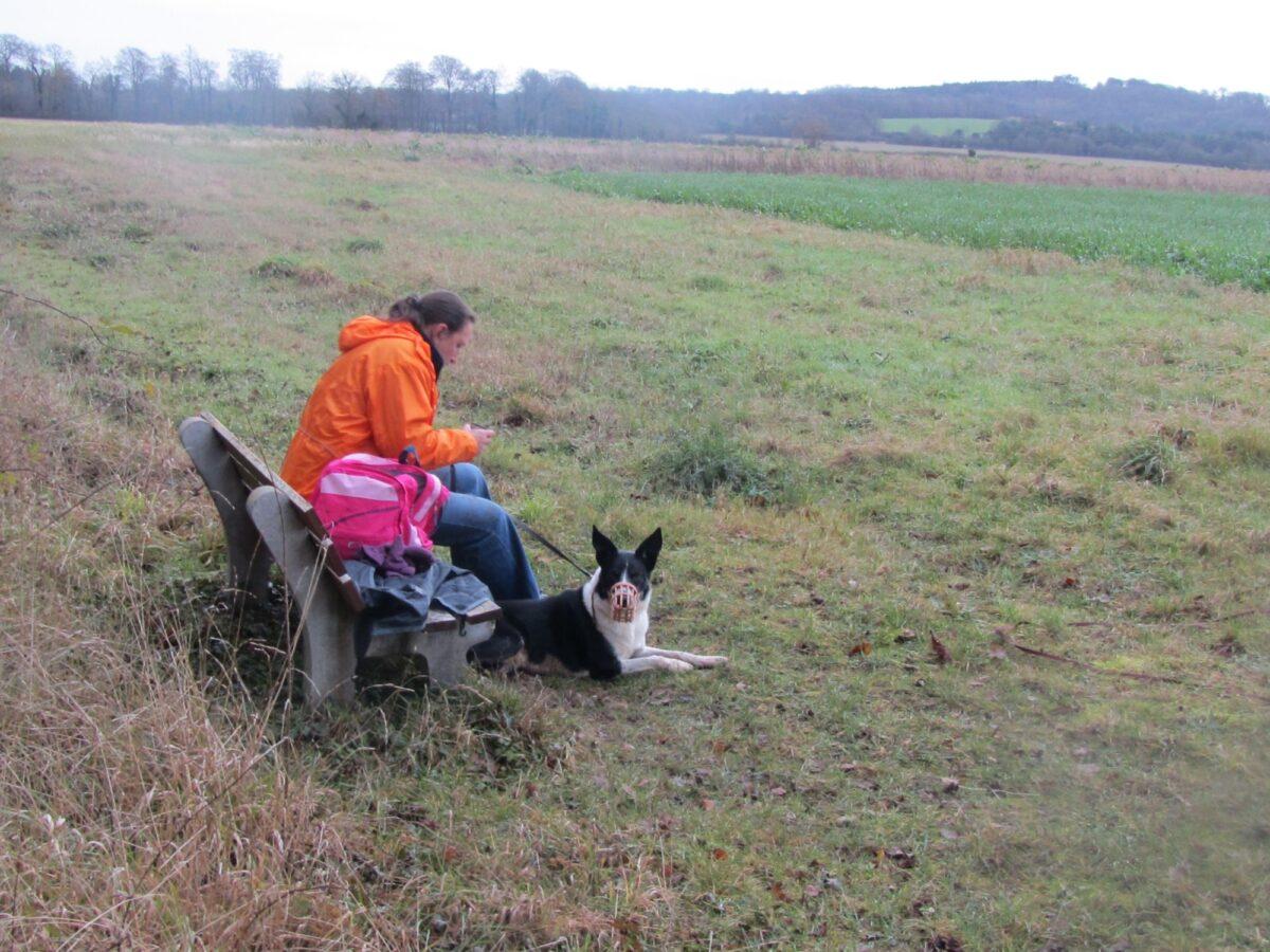 Newton Tony Near Dogs Trust Salisbury large photo 1