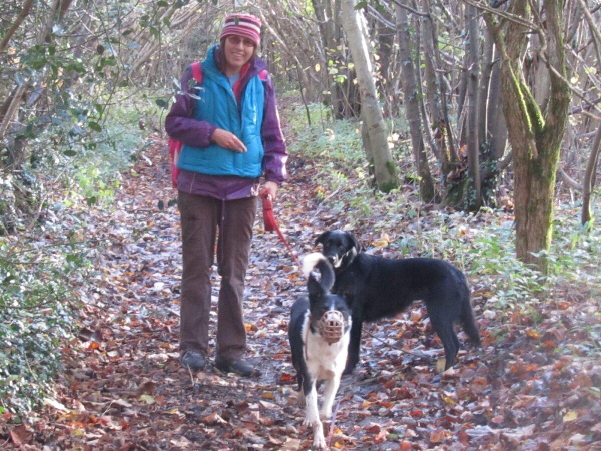 Newton Tony Near Dogs Trust Salisbury large photo 3