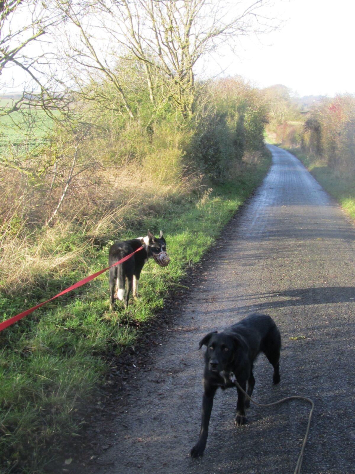 Newton Tony Near Dogs Trust Salisbury large photo 7