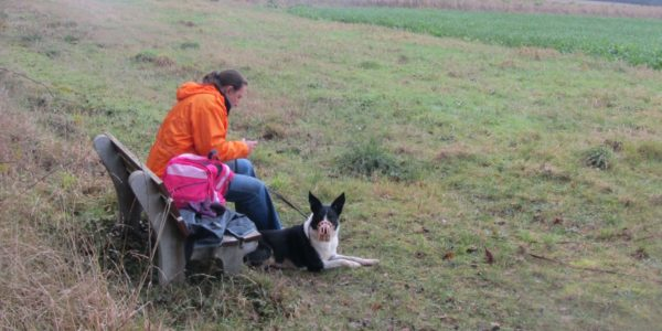Newton Tony Near Dogs Trust Salisbury