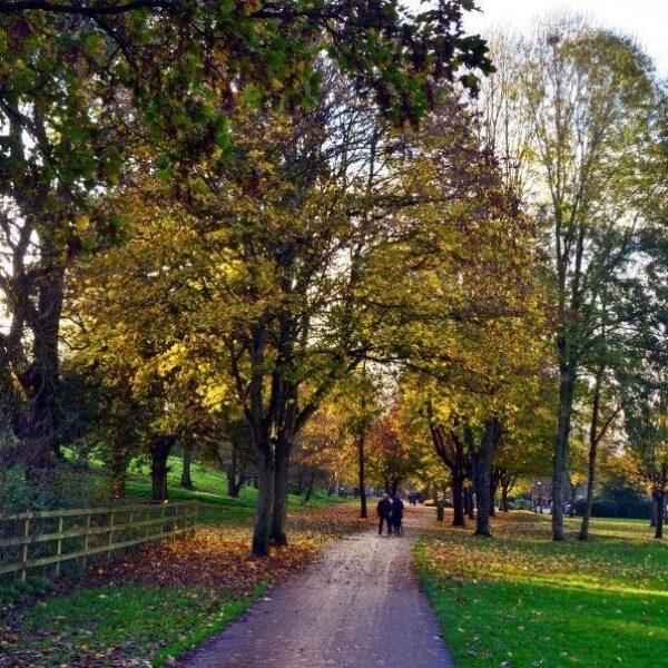 Ninesprings - Yeovil Country Park photo 3