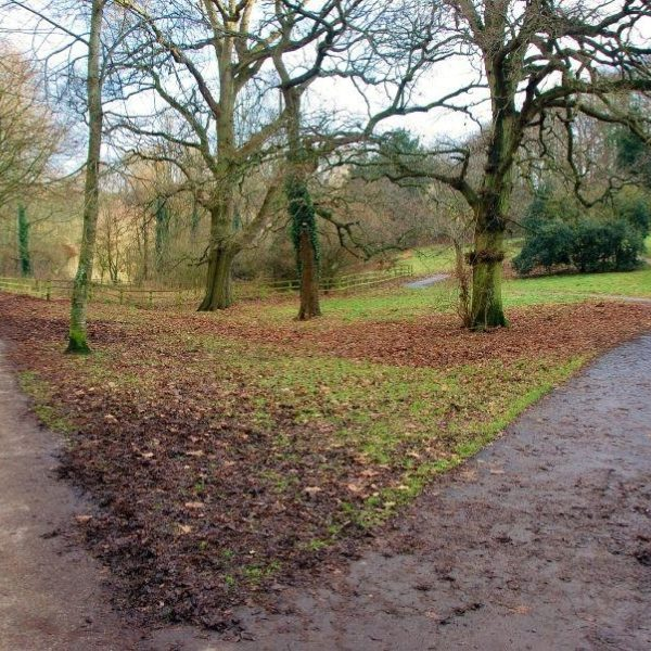 Ninesprings - Yeovil Country Park photo 4