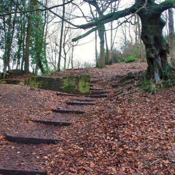 Ninesprings - Yeovil Country Park photo 5