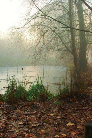 Dog walk at Ninesprings - Yeovil Country Park photo