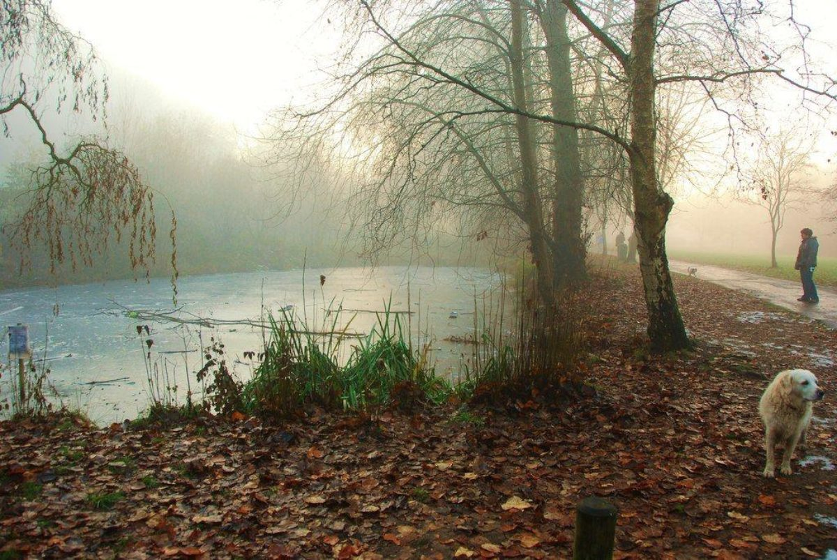 Ninesprings - Yeovil Country Park large photo 1