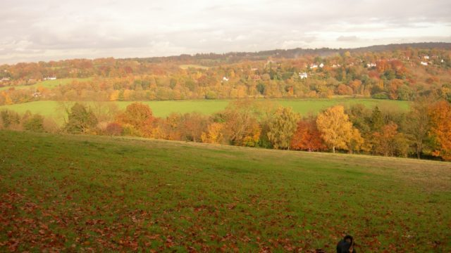 Dog walk at Norbury Park Leatherhead