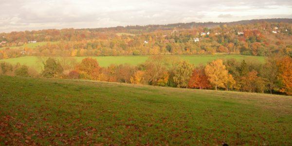 Norbury Park Leatherhead