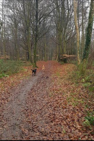 Dog walk at Nore Hill photo
