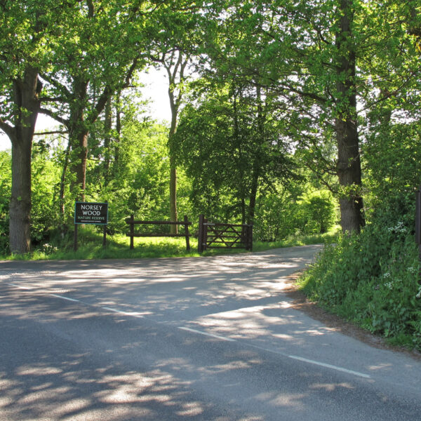 Norsey Woods photo 1