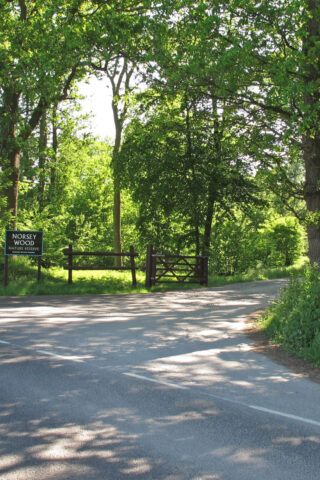 Dog walk at Norsey Woods photo