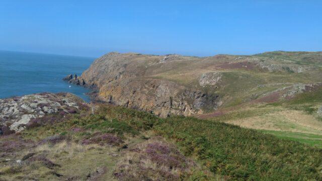 Dog walk at North West Anglesea Coast