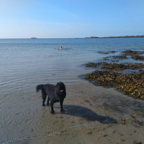 North West Anglesea Coast photo 7