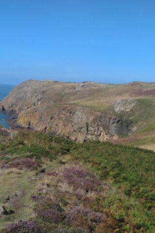 Dog walk at North West Anglesea Coast photo