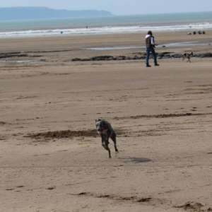 Northam Burrows And Westward Ho!