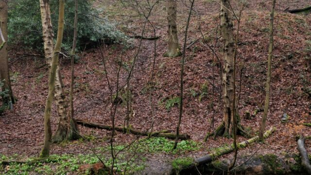 Dog walk at Northcliffe Woods, Shipley