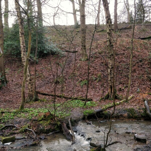Northcliffe Woods, Shipley photo 1