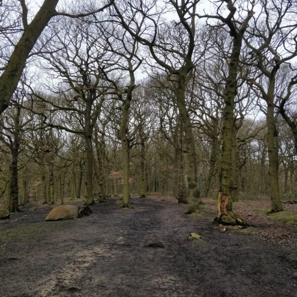 Northcliffe Woods, Shipley photo 4