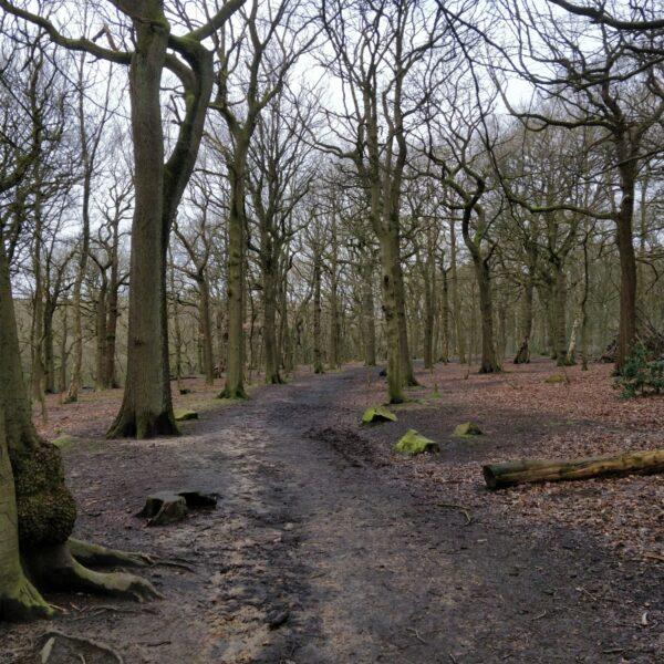 Northcliffe Woods, Shipley photo 5