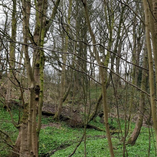 Northcliffe Woods, Shipley photo 6