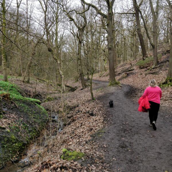 Northcliffe Woods, Shipley photo 3